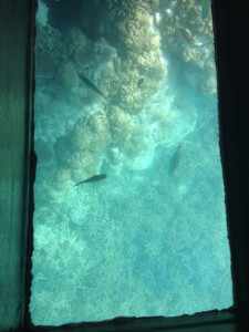 glass-boat-2