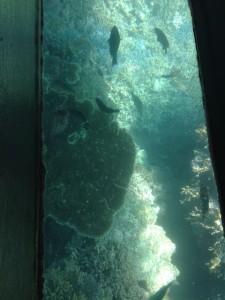 glass-boat-5